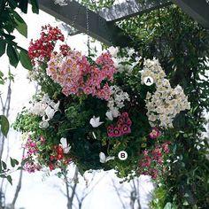 28 Stunning Hanging Baskets
