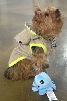 CoCo likes to accesorize her shark hoodie with plush sea themed toys #petsmart #marthastewartpets