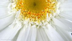 daisy daisy!!