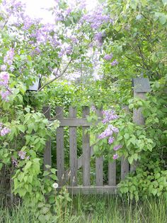 With Lilacs.