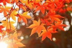 #fall is all around! beautiful #view! / #jesien - przepiękne #widoki i #krajobrazy #wallpapers #freebies #tapetynapulpit