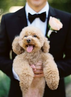 Adorable Wedding Dog     photography by Jose Villa