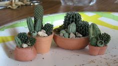 Casey's Minis: Potpourri or Cacti