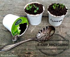 Fresh Eggs Daily®: K-Cup Recycling: Toss the Grounds in your Garden and Turn the Cups into Seed Starters