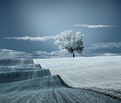 cara ionut, winter, nature, tree, blue, art, warm blanket, blankets, photographi