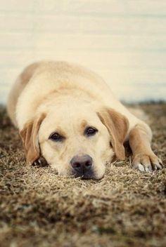 Cute looking doggie relaxing!