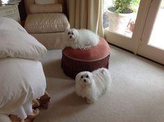 Annie & Dolly