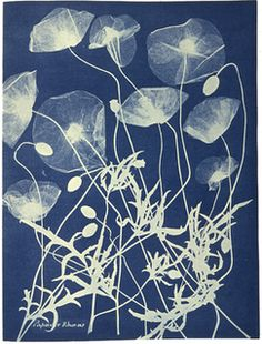 A cyanotype, also called a sun print or blueprint, circa 1850, by British botanist Anna Atkins, 1797-1871