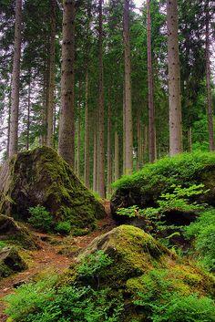 'Through the Trees'