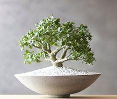 Mini Bonsai | Photo Gallery: Summer Hostess Gift Guide | House & Home
