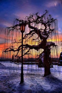 Sunset Tree, Belgrade, Serbia