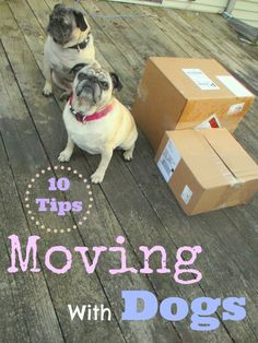 moving with a dog, moving tips for dogs, moving with dogs