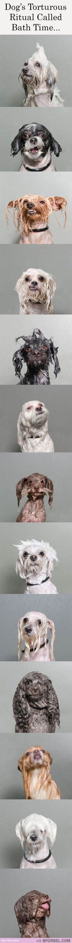 Some call it torture. We call it ... grooming! 13 Dogs Face A Torturous Ritual Called… Bath Time!