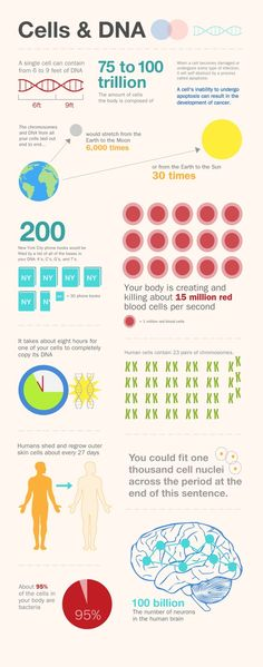 Cells & DNA Fun Facts poster #infografia #infographic