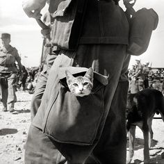 http://www.reddit.com/r/HistoryPorn/comments/21549h/a_french_legionnaire_carries_a_kitten_in_his_leg/