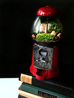 Terrarium made from