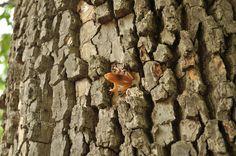 geocach brown, geo cach, tree frogs, frog geocach, creativ geocach, trees, geocach idea