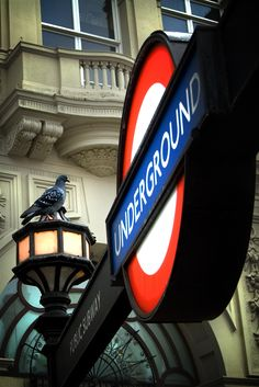 Tube & a pigeon - Piccadilly Circus, London.