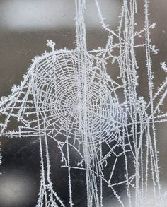 Frosty spider webs