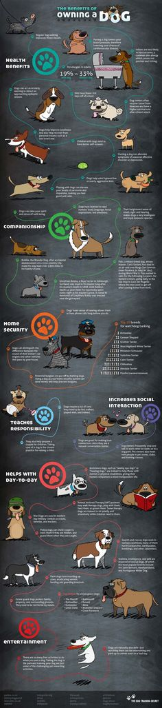 So many benefits of owning a dog!