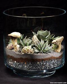 Succulents Terrariums How-To