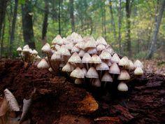 mushroom pilz, cloolis101, hunting, castles, magic mushroom