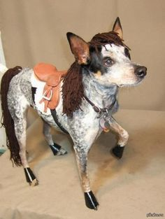 This is an awesome dog halloween costume!