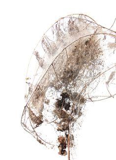 caterpillar nest (mary jo hoffman)