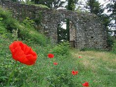 Pour égayer les vieux murs gris du château fort de Romena à Pratovecchio  en Toscane, dame nature fait pousser de l'herbe bien verte et de rouges fleurs. Avez vous l'envie de peindre ce tableau ?
