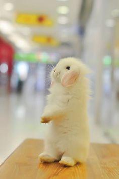 baby bunny. #kawaii