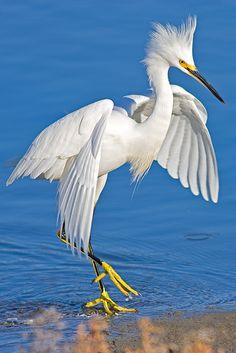 White Crane