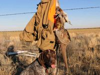 Upland Bird Hunting in Kansas