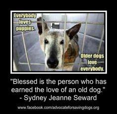 Όλοι αγαπάμε τους μικρούς σκύλους...