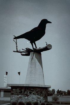 """World's Largest Crow""    Belgrade, Minnesota"