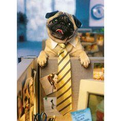 copi room, busi dog, work pug, anim, tie pug, hey, pugs, lets go