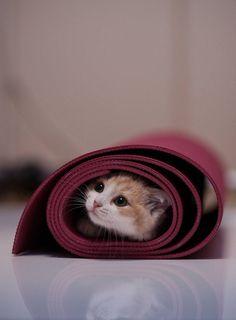 Kitty in a yoga mat.