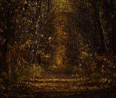 The Golden Floor by Stuart Deacon on 500px