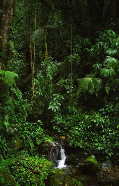 The rain forest in Panama