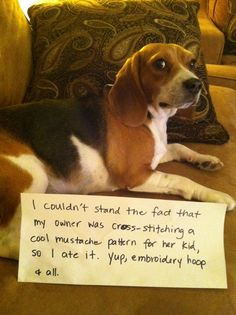 bad, bad dog!