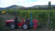 Journal photos des Vendanges 2012 en Alsace