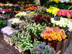 shop pari, parisjador deux, flower shops, france, travel, place, flowers, rue cler, flower market paris