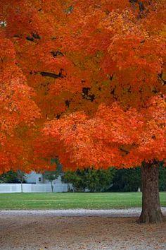 Autumn. Williamsburg VA