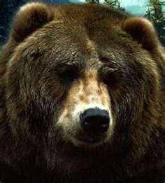 woodburn pattern, bearish thing, bear face, da bear, grizzly bears