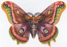 fairies, butterflies, color, art, graphics fairy, graphic fairi, bug, moth, printabl