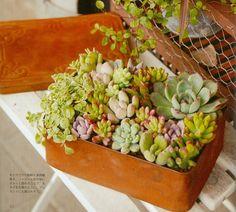 #succulent #plant #garden