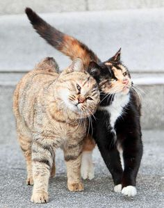 *These two feral cats are spotted on a University campus in Shanghai. They follow each other wherever they go. They share food and warmth and lean on one another for love and comfort according to Jianfu. There is not a moment that they aren't seen together. What an inspiring pair All you need is love!