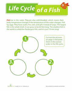 Worksheets: Life Cycle of a Fish