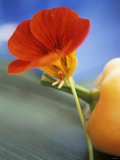 cooking with Nasturtium Flowers