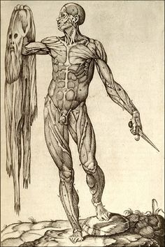 Anatomy print: Juan Valverde de Amusco  (1525-1588 or thereabouts), Anatomia del corpo humano..