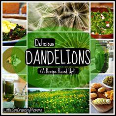 Delicious Dandelions (A Recipe Round Up) ** via LittleOwlCrunchyMomma
